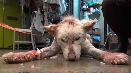 miley Koskettava video: Koira pelastettiin roskakasasta
