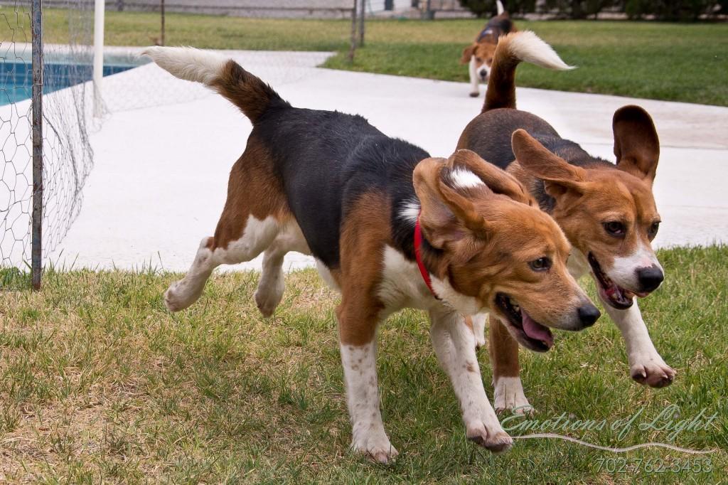 Emotions of light PhotographyPets Dogs 35 1024x682 Koskettava video: Elämänsä häkissä olleet koe eläinkoirat vapautettiin