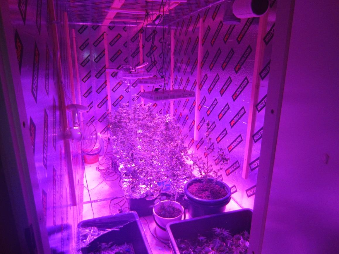 Kannabiskasvin+taimia+kasvamassa+kasvatuskontissa+erillisissä+muovilaatikoissa Suomi konepistooli, dynamiittia,... Poliisin kuvat suomalaisen huumekauppiaan varusteista