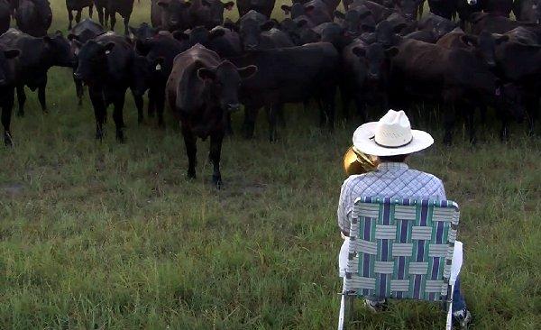 Farmer Derek Klingenberg Serenading the cattle with my trombone Maajussi soitti karjalleen hitibiisin – Loistava lopputulos